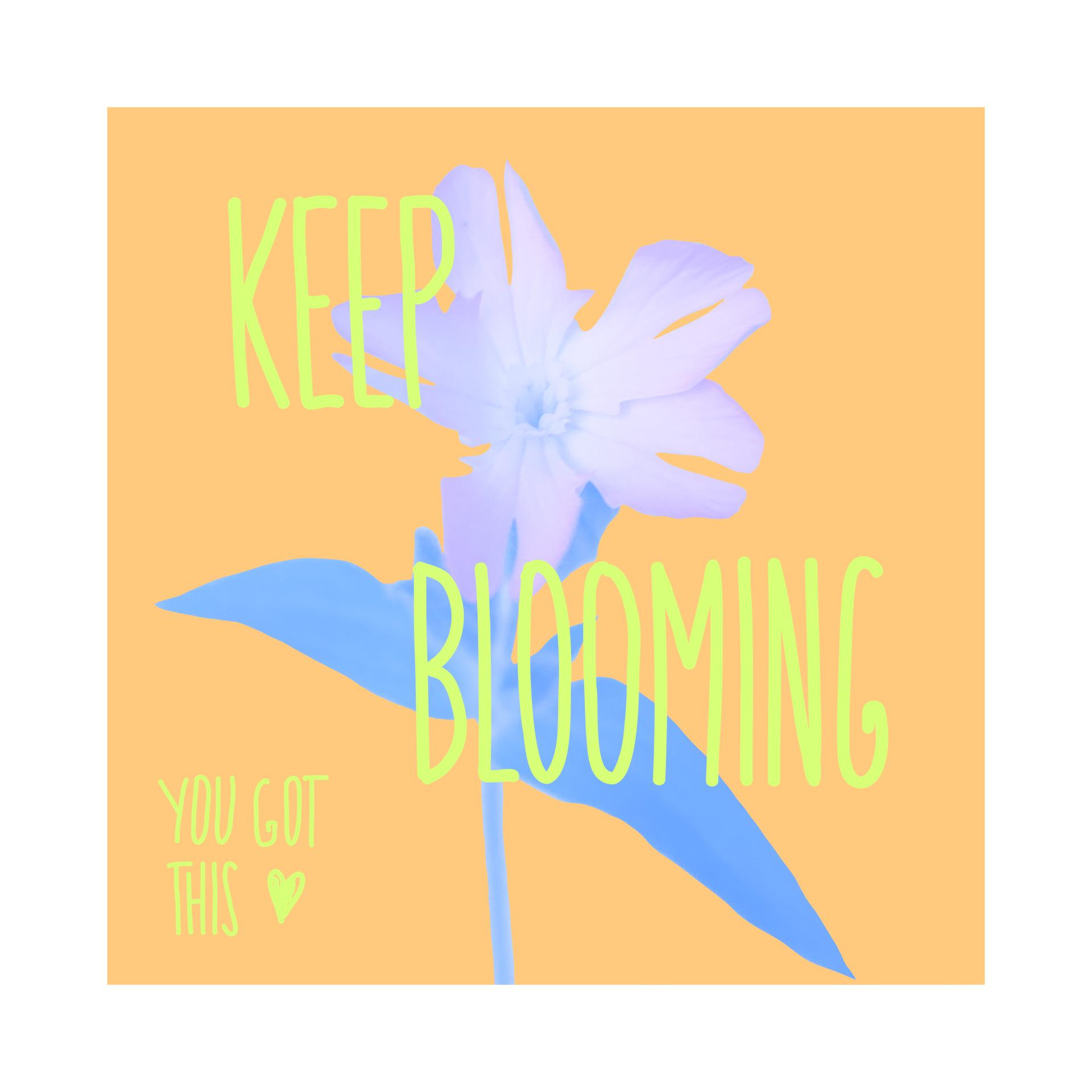 """illustration & bearbeitetes foto. hintergrund orange, farben: pastell-blau & gelb-grün. das foto der pflanze ist freigestellt & komplett blau eingefärbt. darüber steht """"keep blooming"""", links unten in der ecke """"you got this"""" mit einem herz"""
